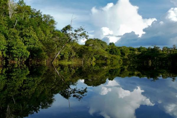 Regenwald am Amazonas River
