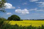 Landwirtschaft mit Rapsfeldern, Schleswig Holstein