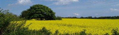 Mittel Europa - Landwirtschaft mit Rapsfeldern, Schleswig Holstein