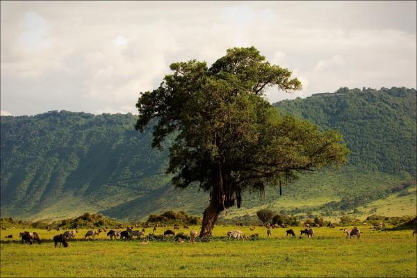 Tansania - CountryTZ