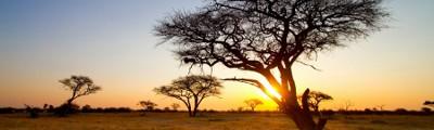 Kontinent Afrika - Hwange Nationalpark, Zimbabwe