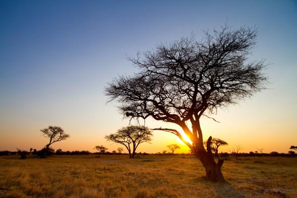 Hwange Nationalpark, Zimbabwe