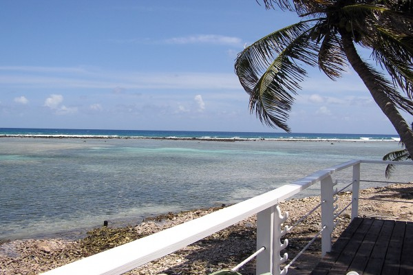 Palme am Strand in Belize