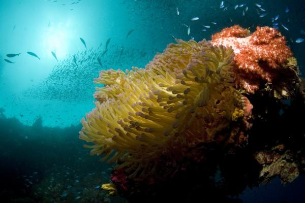 Korallenriff bei Chuuk, Föderierte Staaten von Mikronesien