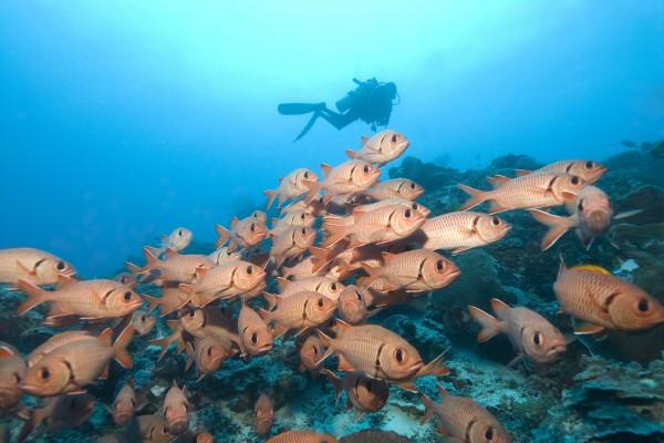 Skuba Taucher bei der Inselwelt Mikronesiens