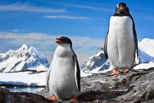 zwei Pinguine auf Felsen