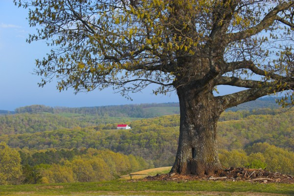 Landschaft in Arkansas
